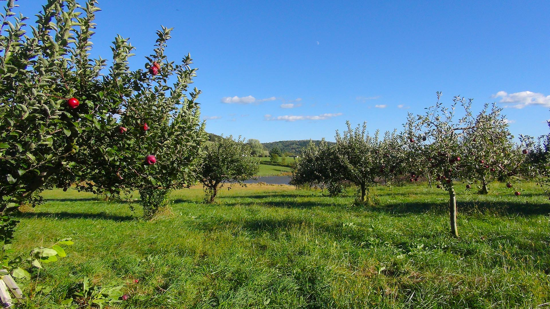 Valley View Farm Fauquier northern Virginia pick your own orchard hard cider