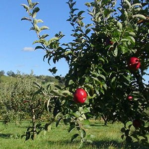 Pick Your Own Orchard Valley View Farm apples peaches cherries pears blueberries blackberries pumpkins